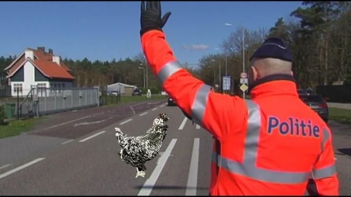 Kip naar België